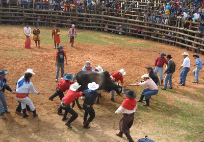 Yag tug of bull